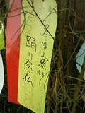 Tanabata2010